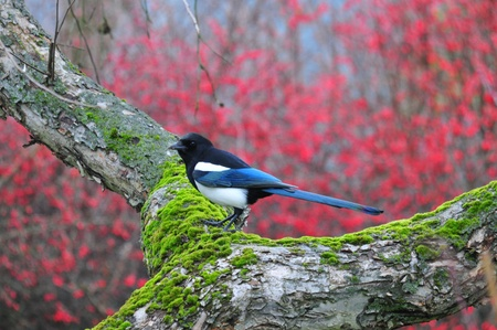 dean: This is a view of magpie on the branch