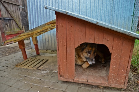 This is a view of dog and doghouse photo