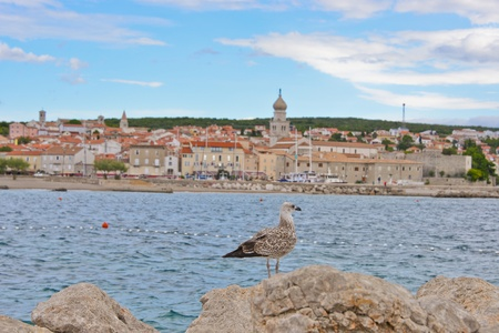 This is a view of the seagull in Krk, Croatia.