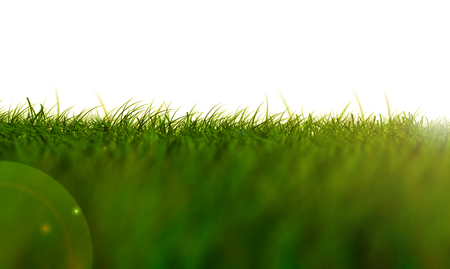 Grass Isolated,light green low Angle Stock Photo