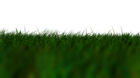 Grass Isolated, dark green low Angle Stock Photo