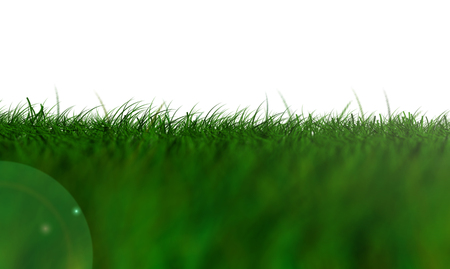 Grass Isolated, light green low Angle