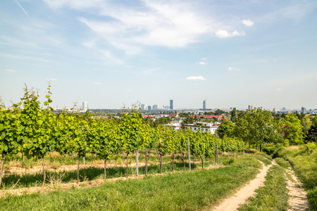 Vineyards of the city of Vienna with the skyline in the background Stock Photo