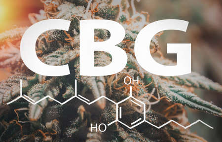 Close up Medical Marijuana with flower buds trichomes with the CBG Cannabigerol letters and chemical structure Banque d'images