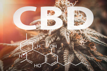 CBD Cannabidiol chemical structure Formula against cannabis plant, medical marijuana concept