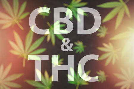 CBD & THC letters written against pattern of Cannabis leaves on black background 版權商用圖片