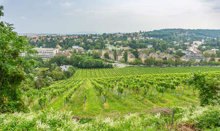 Vienna Austria Aug 12 2020, Areal view of Vineyard in the western part of the City of Vienna 版權商用圖片