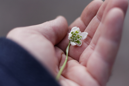 A snowdrop in a mans hand Stock Photo