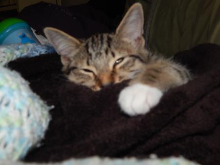 sleepy cat named mischief Reklamní fotografie