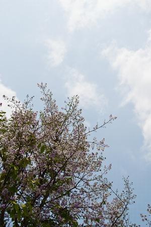 bright sky picture Stock Photo - 13356872
