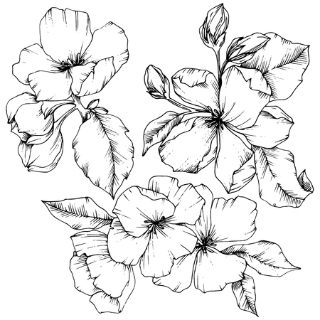 Vector Apple blossom floral botanical flower. Wild spring leaf wildflower isolated. Black and white engraved ink art. Isolated flowers illustration element on white background. Vector Illustration
