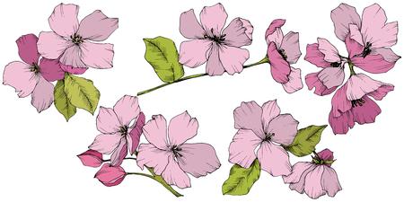 Vector Appe blossom floral botanical flowers. Pink and green engraved ink art. Wild spring leaf. Isolated apple blossom flower illustration element. 일러스트