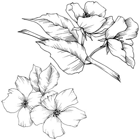 Vector Appe blossom floral botanical flowers. Black and white engraved ink art. Wild spring leaf. Isolated apple blossom flower illustration element.
