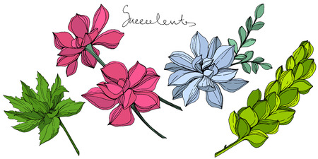 Vector Jungle botanical succulent flower. Engraved ink art illustration. Isolated succulents illustration element.