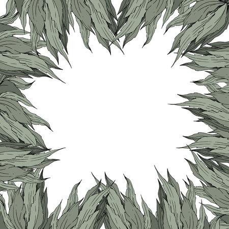 Vector Jungle botanical succulent flower on white background. Wild spring leaf isolated. Engraved ink art illustration. Frame border ornament square.
