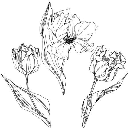 Vector Tulip Art d'encre gravé noir et blanc. Fleur botanique florale. Fleur sauvage de feuille de printemps sauvage isolée. Élément d'illustration tulipe isolé.