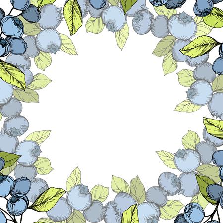 Vector Blueberry blue and green engraved ink art. Berries and green leaves. Leaf plant botanical garden floral foliage. Frame border ornament square. Illustration