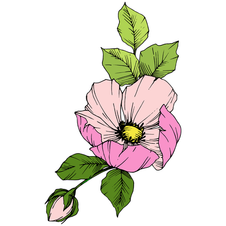 Vector Pink rosa canina. Floral botanical flower. Wild spring leaf wildflower isolated. Engraved ink art. Isolated rosa canina illustration element. 版權商用圖片 - 125254343