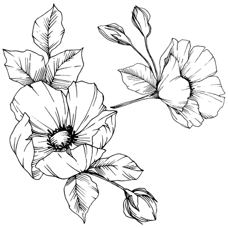 Vector Rosa canina. Floral botanical flower. Wild spring leaf wildflower isolated. Black and white engraved ink art. Isolated rosa canina illustration element. Vector Illustration