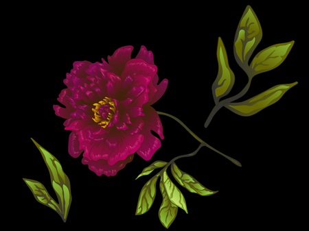 Vector Burgundy peony floral botanical flower. Wild spring leaf wildflower isolated. Engraved ink art. Isolated peonies illustration element on black background.