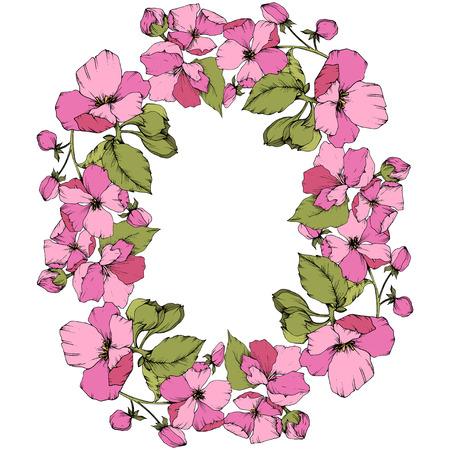 Vector Pink Apple blossom floral botanical flower. Wild spring leaf isolated. Engraved ink art. Frame border ornament square on white background. Ilustração