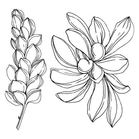Vector Jungle botanical succulent flower. Wild spring leaf isolated. Black and white engraved ink art. Isolated succulents illustration element. Stock Illustratie