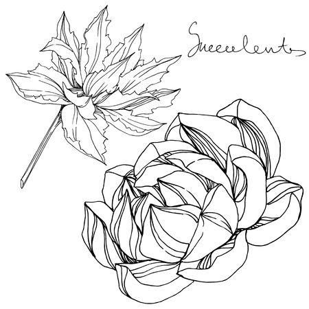 Vector Jungle botanical succulent flower. Wild spring leaf isolated. Black and white engraved ink art. Isolated succulents illustration element. Ilustrace