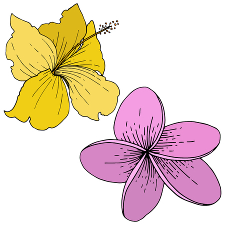 Vector Hibiscus floral tropical flowers. Wild spring leaf wildflower isolated. Engraved ink art. Isolated hibiscus illustration element on white background.