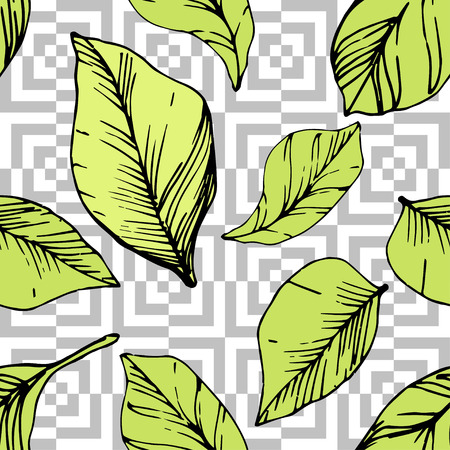 Vector Blueberry green and black engraved ink art. Green leaves. Leaf plant botanical garden floral foliage. Seamless background pattern. Fabric wallpaper print texture. Çizim