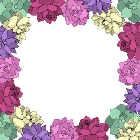 Vector Succulents floral botanical flower. Wild spring leaf wildflower isolated. Engraved ink art on white background. Frame border ornament square.