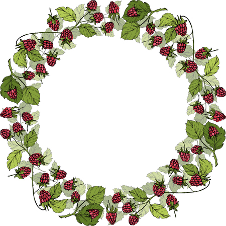 Vector Raspberry healthy food isolated. Red and green engraved ink art. Frame border ornament square on white background. Banque d'images - 123036549