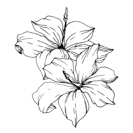 Vector Tropical flowers and leaves isolated. Black and white engraved ink art. Isolated plant illustration element.
