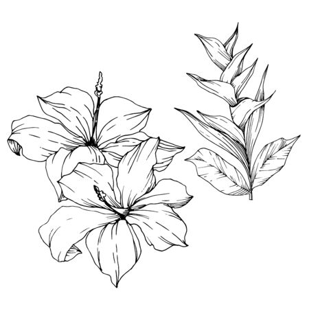 Vector Tropical flowers and leaves isolated. Exotic tropical hawaiian summer. Palm beach tree leaves jungle botanical. Black and white engraved ink art. Isolated plant illustration element. Ilustracja