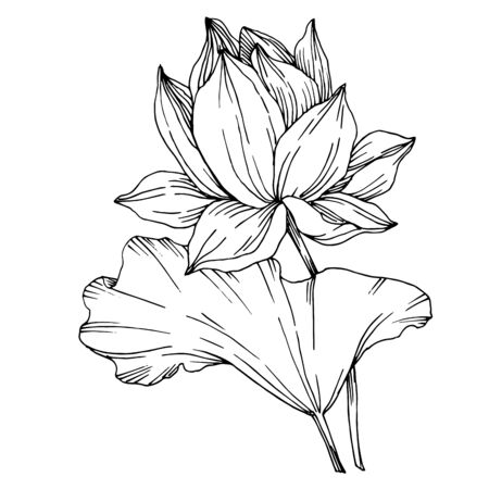 Vector Lotus floral botanical flowers. Black and white engraved ink art. Isolated lotus illustration element. Stock fotó - 129267307
