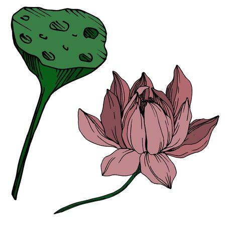 Vector Lotus floral botanical flowers. Black and white engraved ink art. Isolated lotus illustration element. Çizim