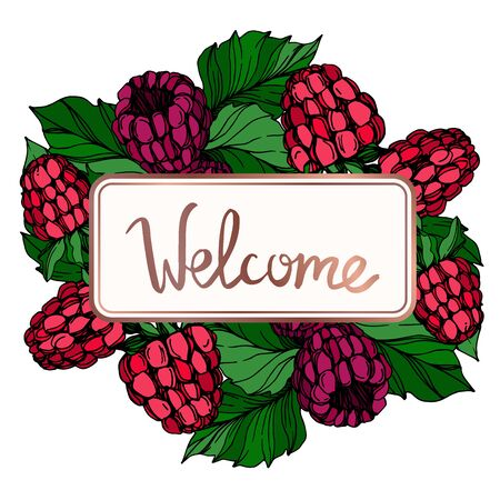 Vector Raspberry healthy food fresh berry isolated. Black and white engraved ink art. Frame border ornament square.