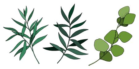 Vector Leaves branch. Black and white engraved ink art. Isolated branches illustration element. Vecteurs