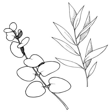 Branche de feuilles de vecteur. Art d'encre gravé en noir et blanc. Élément d'illustration de branches isolées. Vecteurs