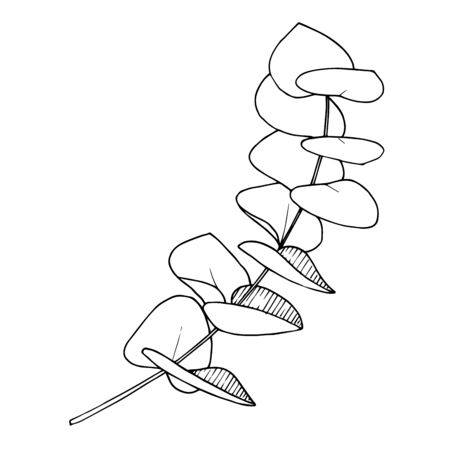 Vector Leaves branch. Black and white engraved ink art. Isolated branches illustration element.