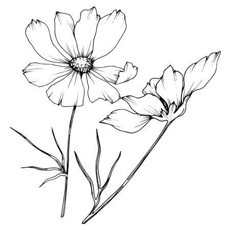 Vektor-Kosmos botanische Blumen mit Blumen. Wildes Frühlingsblatt Wildflower isoliertes Element. Schwarz-weiß gravierte Tinte Art.-Nr. Isoliertes Cosmea-Illustrationselement. Vektorgrafik
