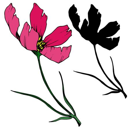 Vector Cosmos floral botanical flowers. Black and white engraved ink art. Isolated cosmea illustration element.  イラスト・ベクター素材