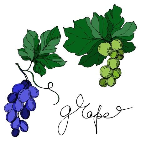Vector Grape berry healthy food. Black and white engraved ink art. Isolated grapes illustration element on white background.