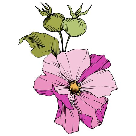 Wildflower rosa canina in a vector style isolated. Pink engraved ink art.