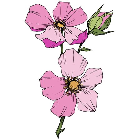 Wildflower rosa canina in a vector style isolated. Pink engraved ink art. 版權商用圖片 - 132651285