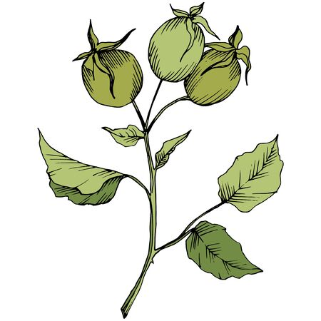 Wildflower rosa canina in a vector style isolated. Green engraved ink art.