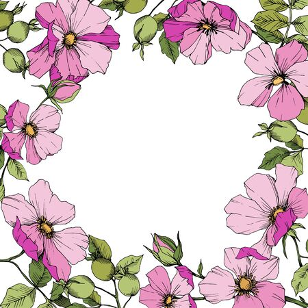 Wildflower rosa canina in a vector style isolated. Frame border ornament square.