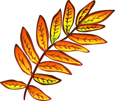 Vector autumn yellow sorbus leaves. Leaf plant botanical garden floral foliage. Isolated illustration element. Vector leaf for background, texture, wrapper pattern, frame or border.