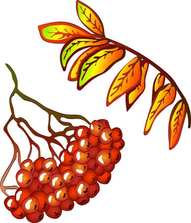 Vector autumn yellow sorbus leaves and red berry. Leaf plant botanical garden floral foliage. Isolated illustration element. Vector leaf for background, texture, wrapper pattern, frame or border. Ilustrace