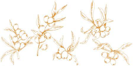 Orange hippophae plant. Vector icon on white background.