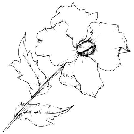 Pavot de fleurs sauvages dans un style vectoriel isolé.